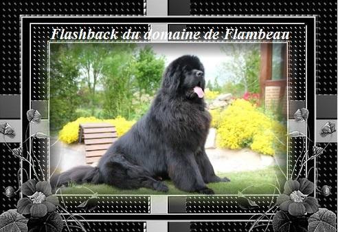 flachback 1